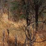hidden animals 1 - revealed