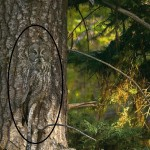hidden animals 2 - revealed