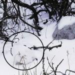 hidden animals 5 - revealed