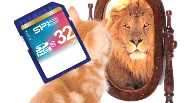 mirror lion cat and sd card